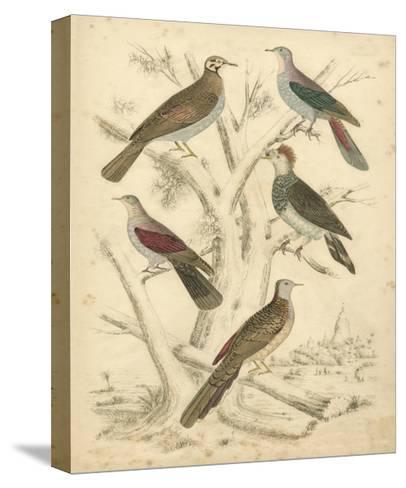Avian Habitat I-Milne-Stretched Canvas Print