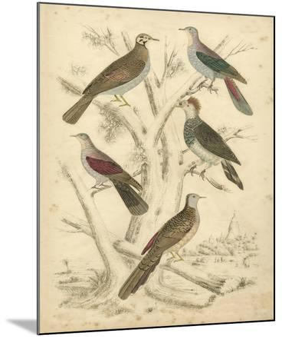 Avian Habitat I-Milne-Mounted Art Print