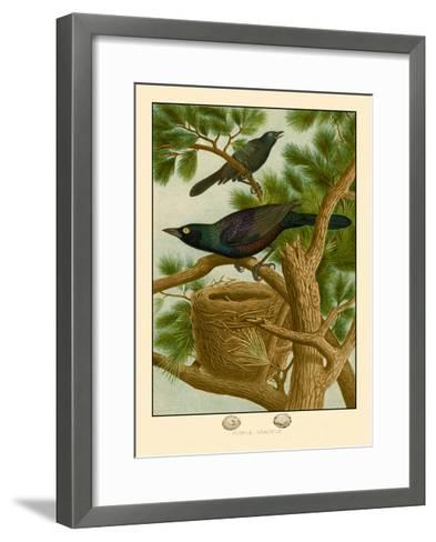 Purple Grackle--Framed Art Print