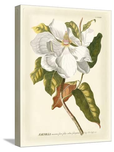 Magnificent Magnolias I-Jacob Trew-Stretched Canvas Print