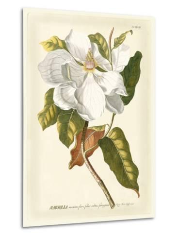 Magnificent Magnolias I-Jacob Trew-Metal Print