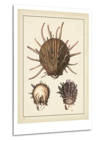 Antique Shells I-Denis Diderot-Metal Print
