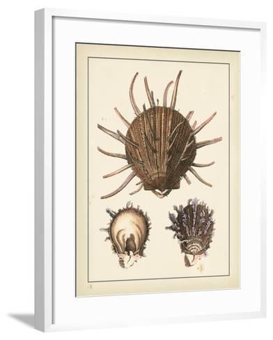 Antique Shells I-Denis Diderot-Framed Art Print
