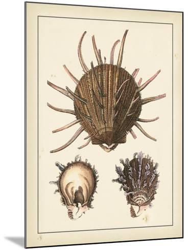 Antique Shells I-Denis Diderot-Mounted Art Print