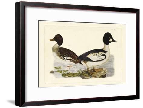 Selby Duck I-John Selby-Framed Art Print