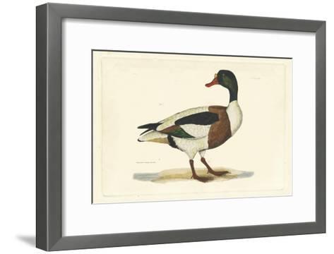 Selby Duck II-John Selby-Framed Art Print