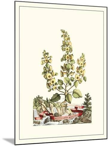 Grandiose View IV-Abraham Munting-Mounted Art Print