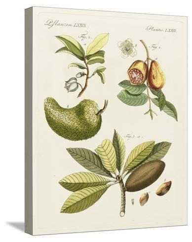 Breadfruit-Bertuch-Stretched Canvas Print