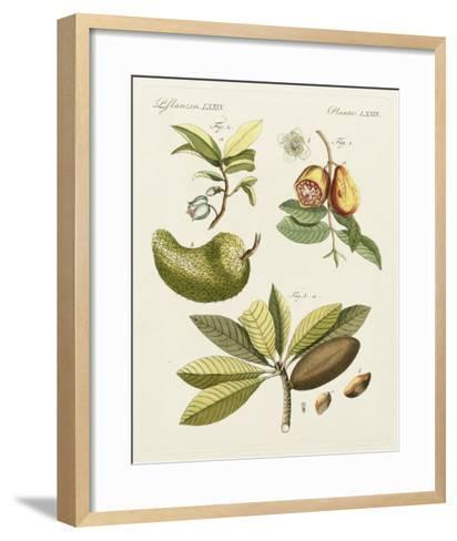 Breadfruit-Bertuch-Framed Art Print