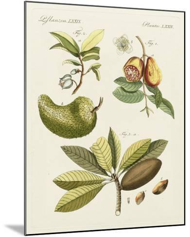 Breadfruit-Bertuch-Mounted Art Print
