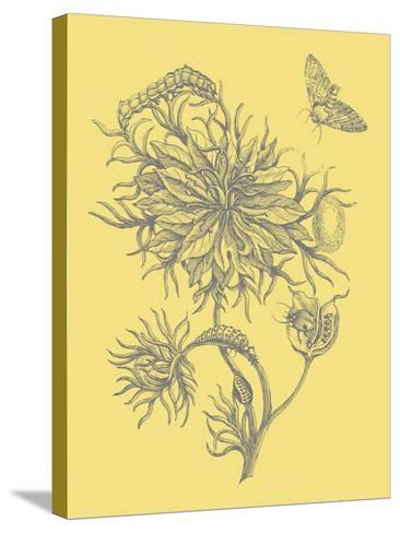 Nature's Optimism II-Vision Studio-Stretched Canvas Print