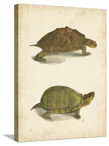 Turtle Duo IV-J^W^ Hill-Stretched Canvas Print