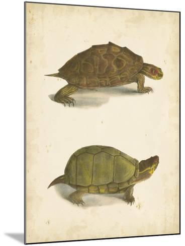 Turtle Duo IV-J^W^ Hill-Mounted Art Print