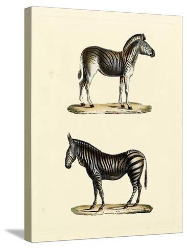 Animal Studies I-Vision Studio-Stretched Canvas Print