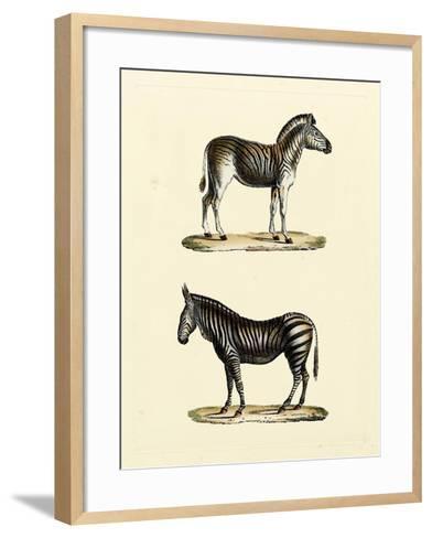 Animal Studies I-Vision Studio-Framed Art Print