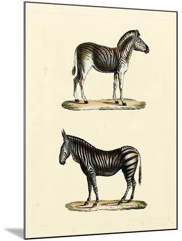 Animal Studies I-Vision Studio-Mounted Art Print