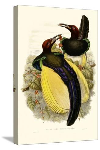 Gould Bird of Paradise IV-John Gould-Stretched Canvas Print