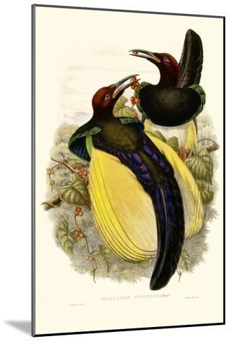 Gould Bird of Paradise IV-John Gould-Mounted Art Print