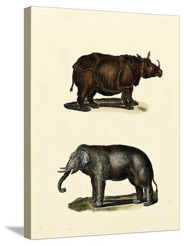 Animal Studies IV-Vision Studio-Stretched Canvas Print