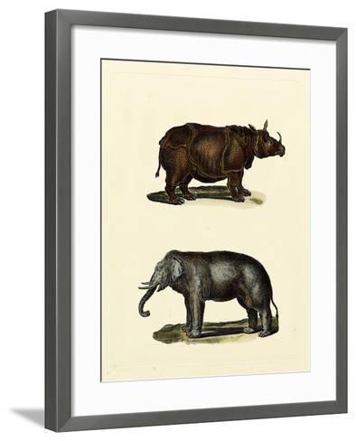 Animal Studies IV-Vision Studio-Framed Art Print