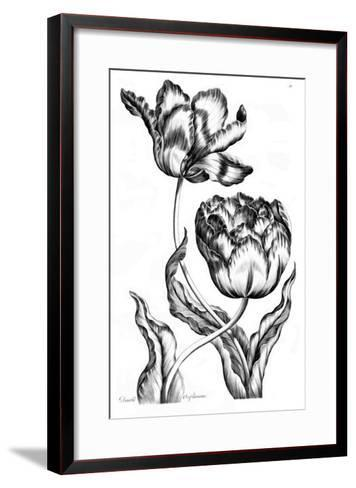 Double Oriflamme-Porter Design-Framed Art Print