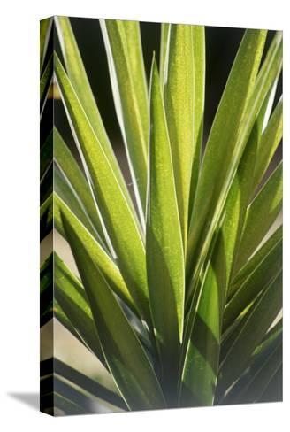 Tropical Leaf 8-Porter Design-Stretched Canvas Print