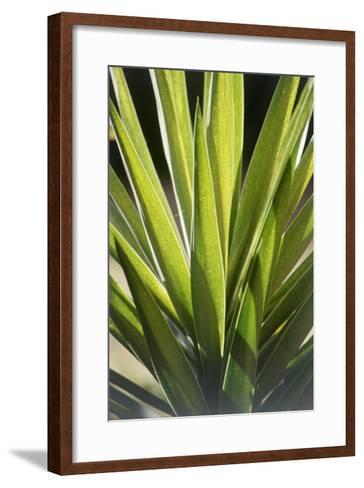 Tropical Leaf 8-Porter Design-Framed Art Print