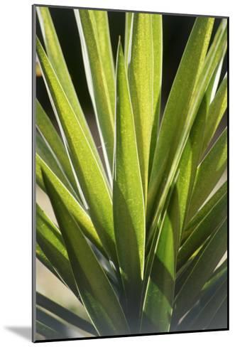 Tropical Leaf 8-Porter Design-Mounted Premium Giclee Print