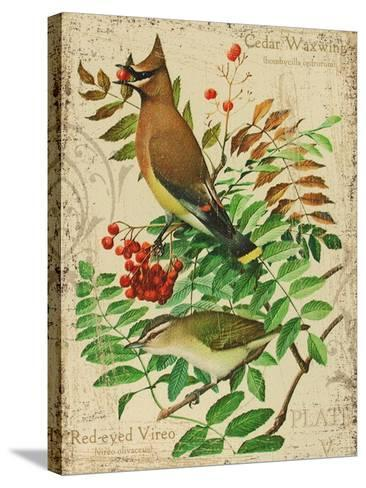 Cedar Waxwing-Kate Ward Thacker-Stretched Canvas Print