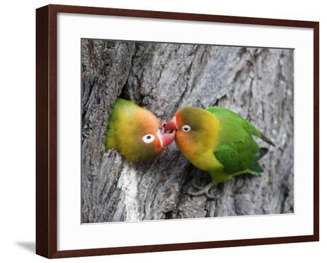 Close-Up of a Pair of Lovebirds, Ndutu, Ngorongoro, Tanzania--Framed Art Print