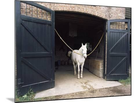 Horse Standing in a Stable, Middleton Place, Charleston, Charleston County, South Carolina, USA--Mounted Photographic Print