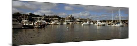 Boats at a Harbor, Oak Bluffs, Martha's Vineyard, Dukes County, Massachusetts, USA--Mounted Photographic Print