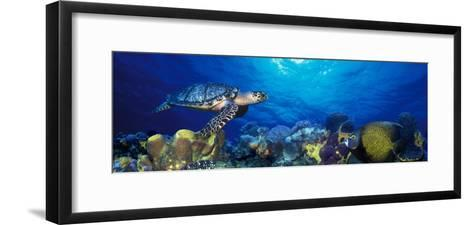 Hawksbill Turtle and French Angelfish with Stoplight Parrotfish--Framed Art Print
