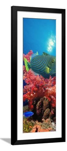 Orange-Lined Triggerfish and Soft Corals in the Ocean--Framed Art Print