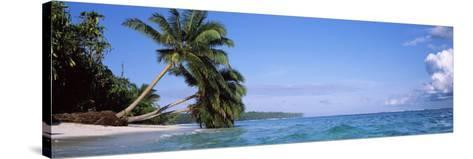 Palm Trees on the Beach, Indonesia--Stretched Canvas Print
