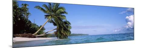 Palm Trees on the Beach, Indonesia--Mounted Photographic Print