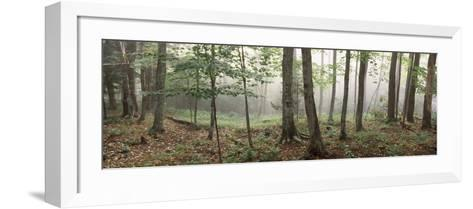 Trees in a Forest, Old Forge, Adirondack Mountains, Herkimer County, New York State, USA--Framed Art Print