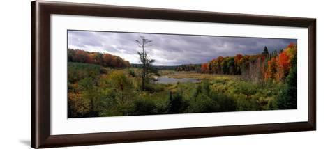 Trees in a Forest, Ottawa National Forest, North Woods, Upper Peninsula, Michigan, USA--Framed Art Print