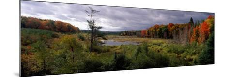 Trees in a Forest, Ottawa National Forest, North Woods, Upper Peninsula, Michigan, USA--Mounted Photographic Print