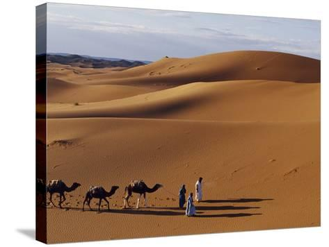 Berber Tribesmen Lead their Camels Through the Sand Dunes of the Erg Chegaga, in the Sahara Region -Mark Hannaford-Stretched Canvas Print