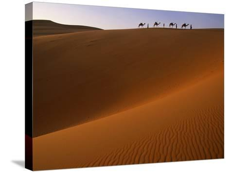 Tenere Desert, Camel Caravan Travelling Through the Air Mountains and Tenere Desert, Niger-Paul Harris-Stretched Canvas Print