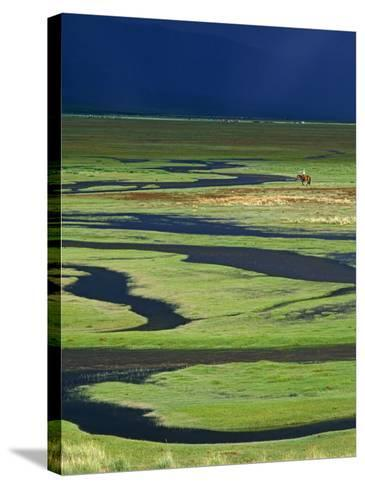 Steppeland, A Lone Horse Herder Out on the Steppeland, Mongolia-Paul Harris-Stretched Canvas Print