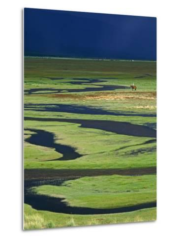 Steppeland, A Lone Horse Herder Out on the Steppeland, Mongolia-Paul Harris-Metal Print
