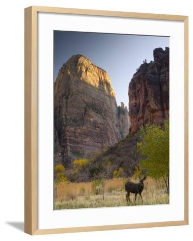Utah, Zion National Park, the Great White Throne, USA-Alan Copson-Framed Art Print