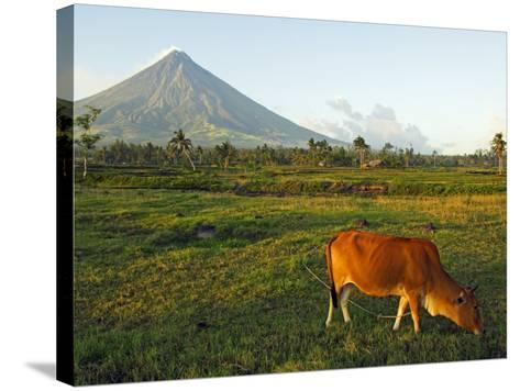 Luzon Island, Bicol Province, Mount Mayon Volcano, Philippines-Christian Kober-Stretched Canvas Print