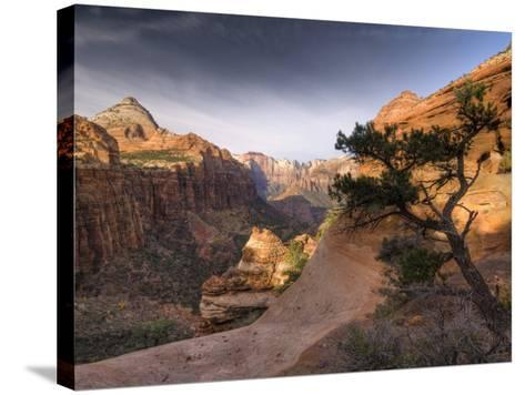 Utah, Zion National Park, from Canyon Overlook, USA-Alan Copson-Stretched Canvas Print