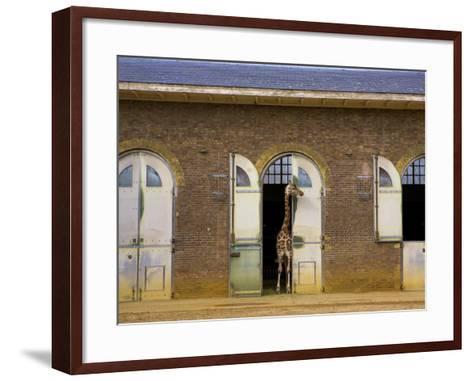 London Zoo, London, England, UK-Neil Farrin-Framed Art Print