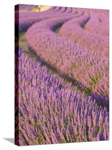 Lavender Field, Provence-Alpes-Cote D'Azur, France-Doug Pearson-Stretched Canvas Print