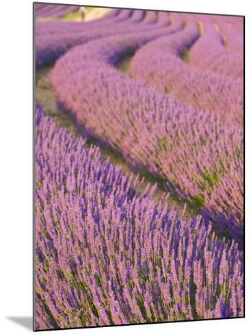 Lavender Field, Provence-Alpes-Cote D'Azur, France-Doug Pearson-Mounted Photographic Print