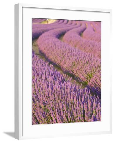 Lavender Field, Provence-Alpes-Cote D'Azur, France-Doug Pearson-Framed Art Print